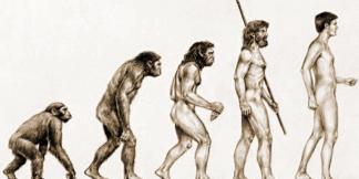 evolution-de-homme